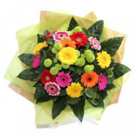 Wondrous Gerbera Bright